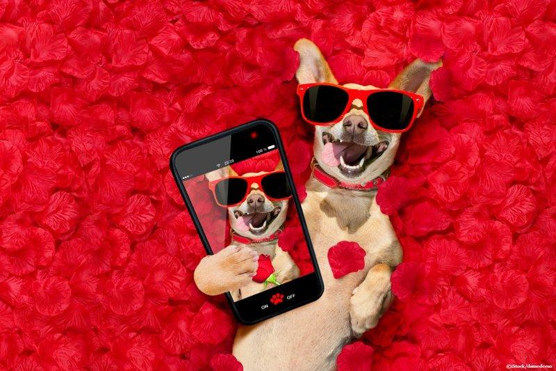 Dog uses snapchat filter